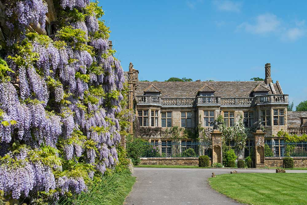 Wisteria on the stable block in front of Mapperton House